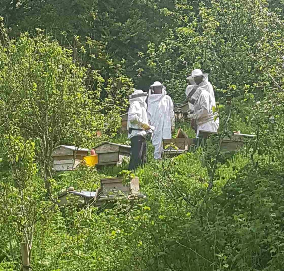 beekeepers taking care of their bee hives