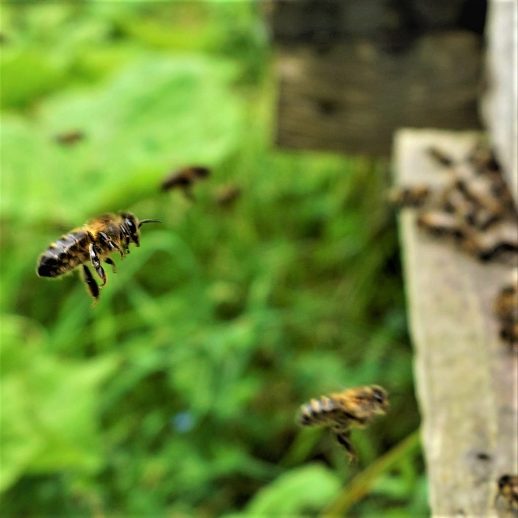 bees landing in a hive